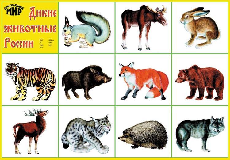 Растения и животные Красной книги Челябинской области